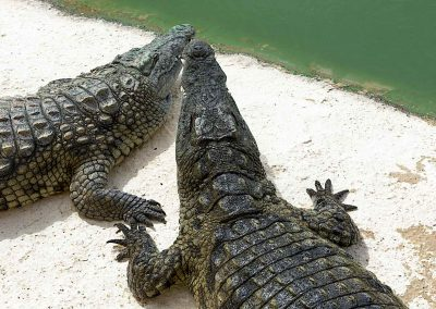 Crocparc-crocodiles_A8A2851