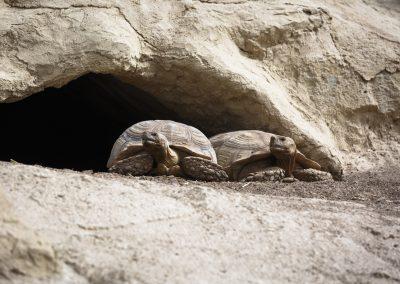 Crocoparc-Tortues-géantes_2876
