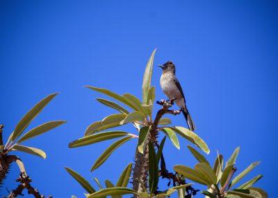 CROCOPARC Agadir Oiseau