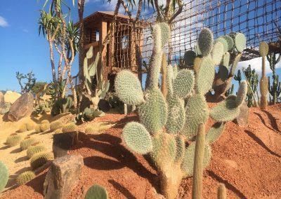 Pont de Singe Jardin des Cactus