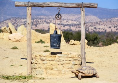 CROCOPARC Agadir Tortue puits