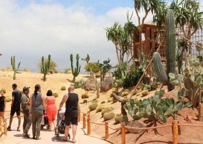 the giant cactus, named the Pringlei