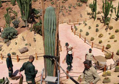 e Pringlei (Pachycereus pringlei) Un cactus géant à Crocoparc
